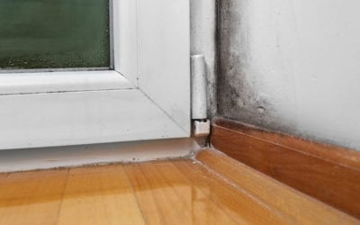 What Are The Best Ways To Prevent Mould Growth In Our Homes?
